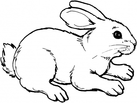 rabbit coloring pages 12,printable,coloring pages
