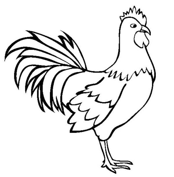 Morning Bird 14 Rooster Coloring Pages