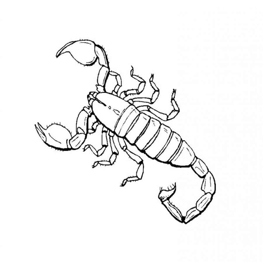scorpion coloring pages printable,printable,coloring pages