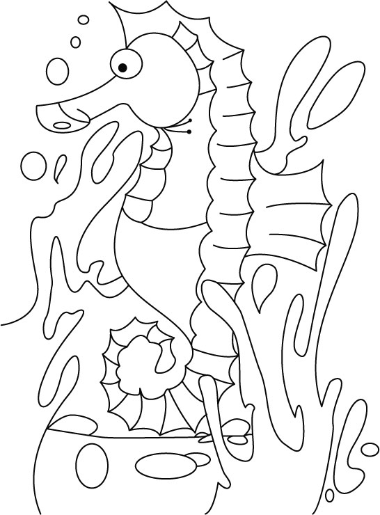 sea horse coloring page - 13 seahorse coloring pages print color craft