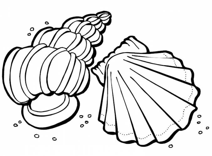 printable seashell coloring pages,printable,coloring pages