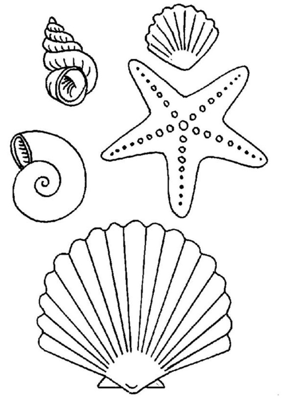 Free Coloring Pages Of Seashells, Download Free Clip Art, Free ... | 832x580