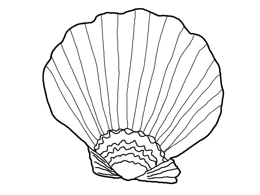 seashell coloring pages 15,printable,coloring pages