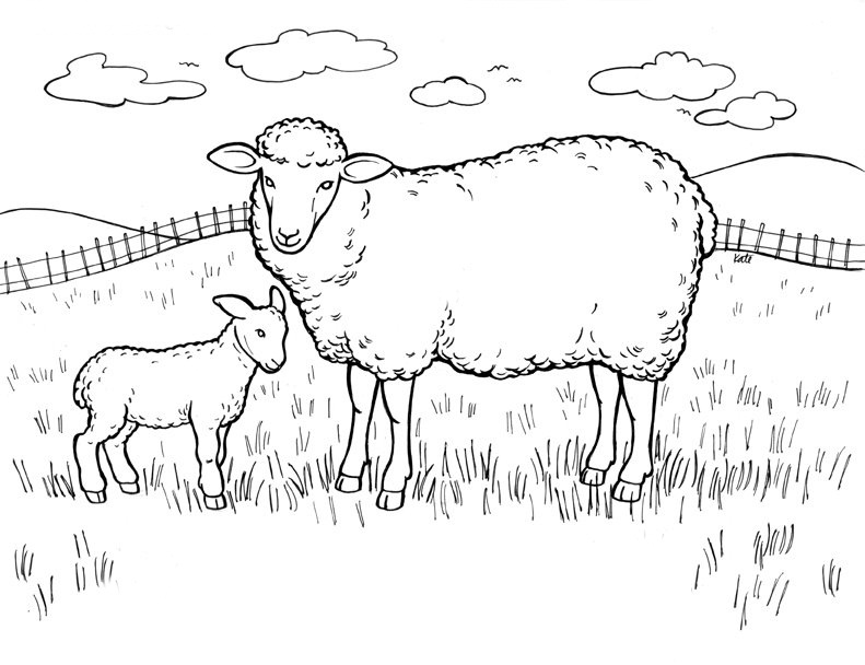 Coloring Animals Sheep Coloring Coloring Pages