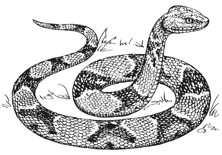 printable pictures of snake page,printable,coloring pages