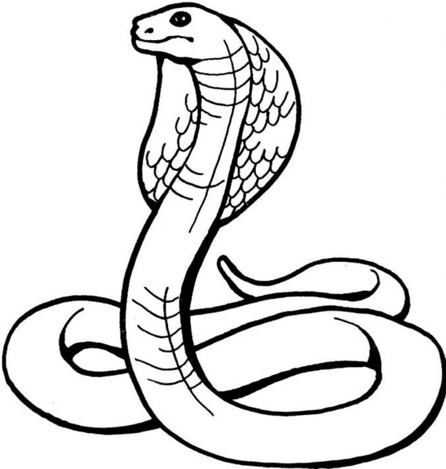 snake coloring pages printable,printable,coloring pages
