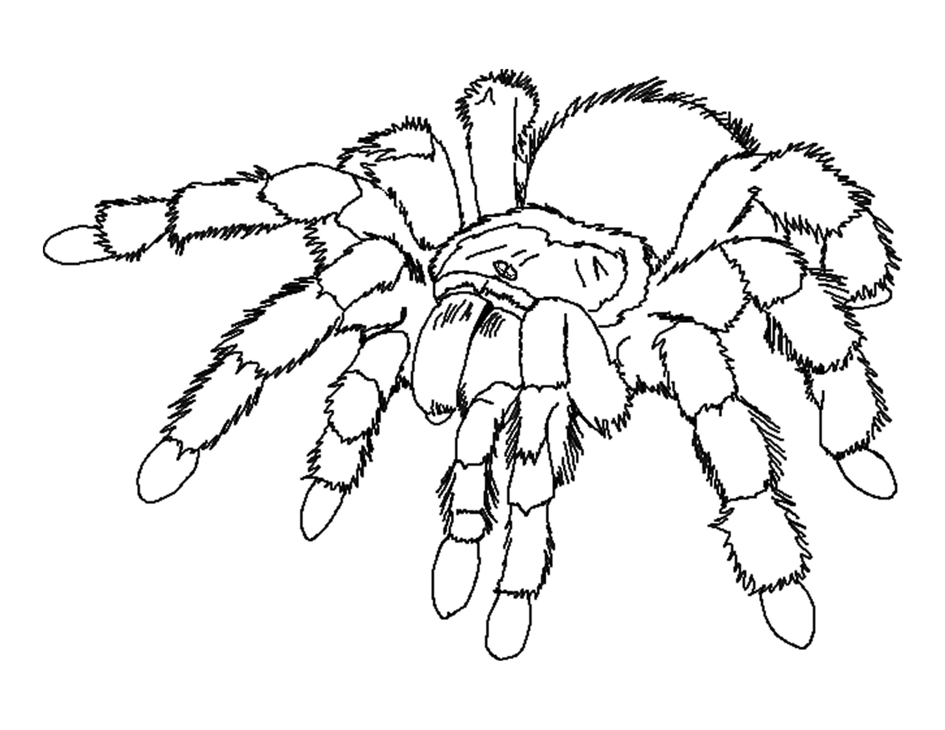 25 Printable spider coloring pages - Print Color Craft