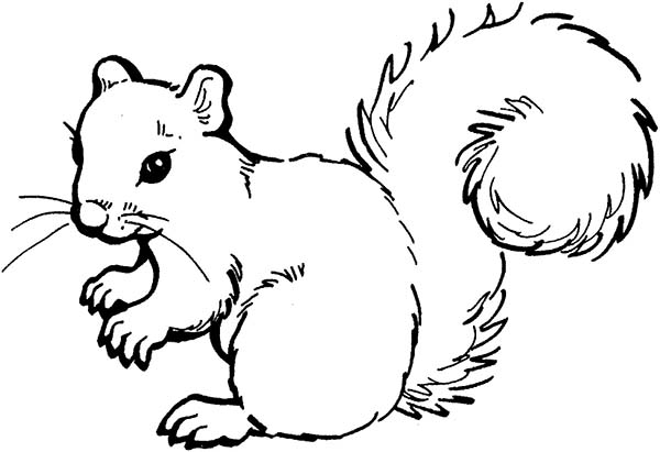printable squirrel coloring pages,printable,coloring pages