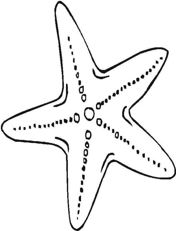 starfish coloring pages for kids,printable,coloring pages
