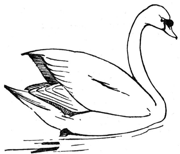 swan coloring pages to print - photo#9
