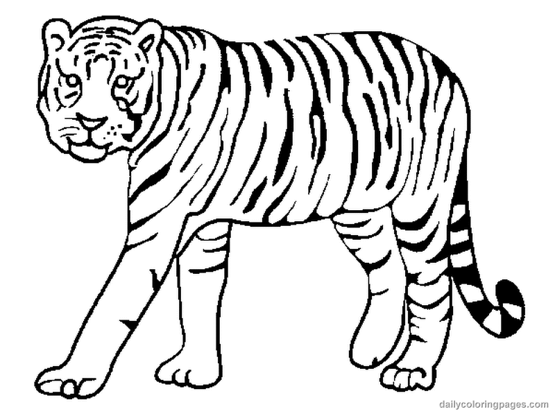 coloring pictures tiger,printable,coloring pages