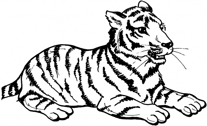 11 printable pictures of tiger page
