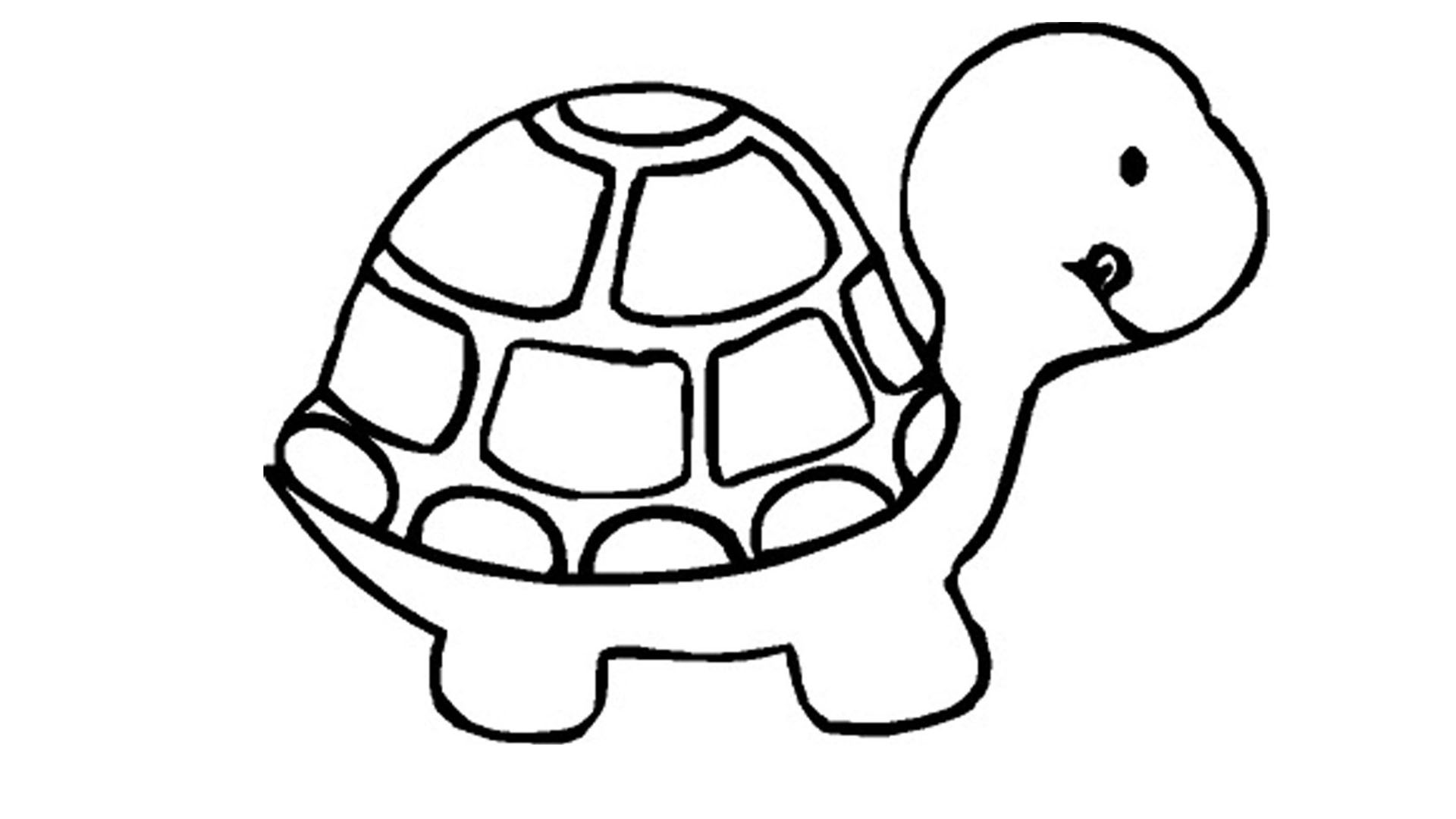 29 coloring pages of turtle - Print Color Craft