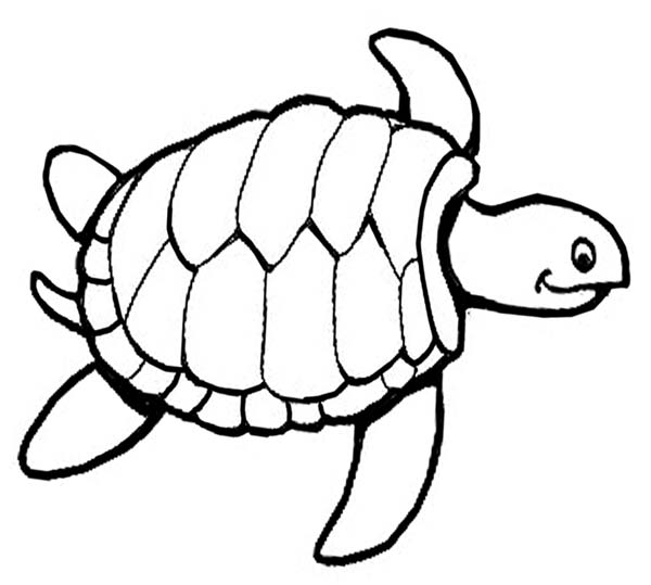kids coloring pages turtle,printable,coloring pages