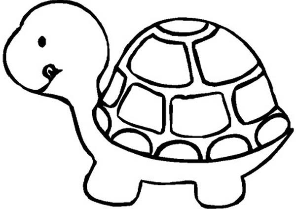 turtle coloring page to print,printable,coloring pages