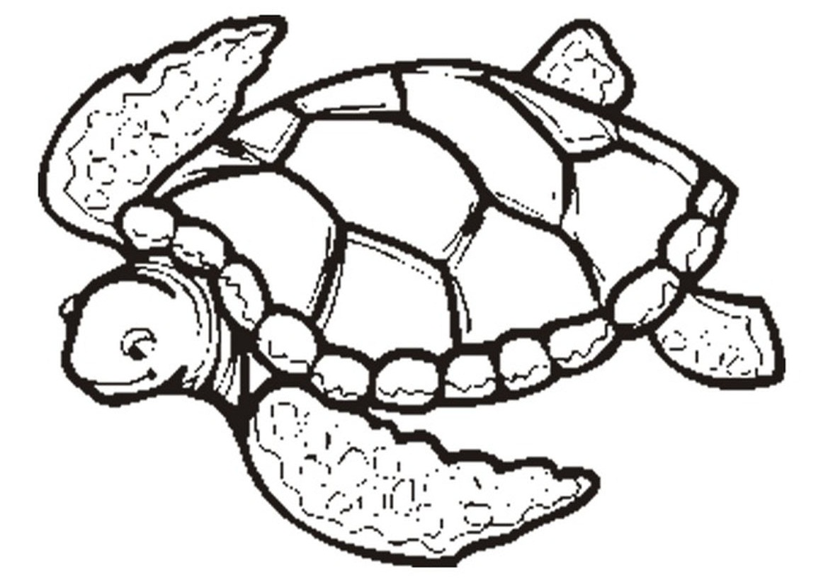 turtle coloring pages 13,printable,coloring pages