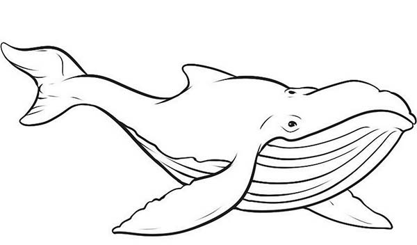 printable pictures of whale page,printable,coloring pages