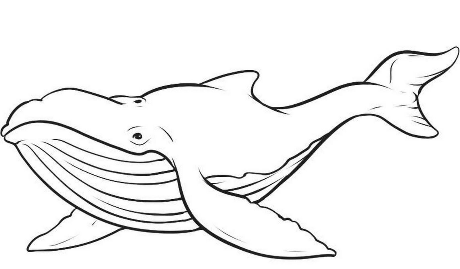 whale coloring pages,printable,coloring pages