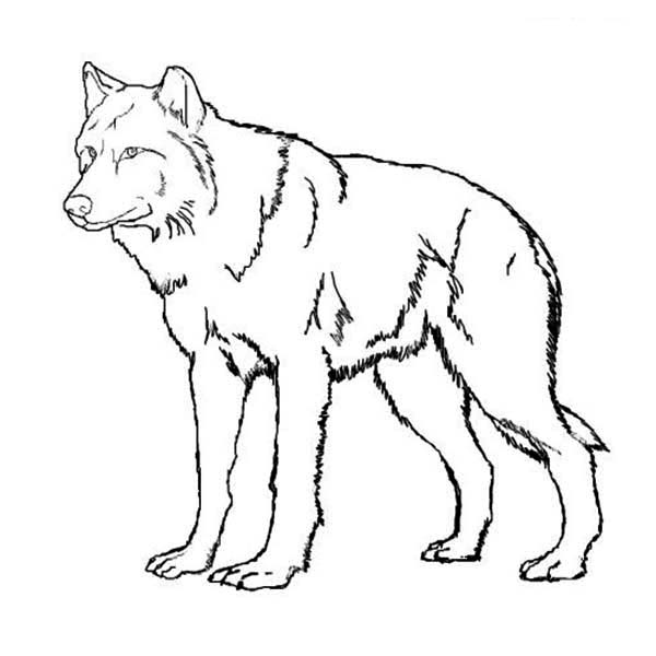 wolves coloring pages - photo#19
