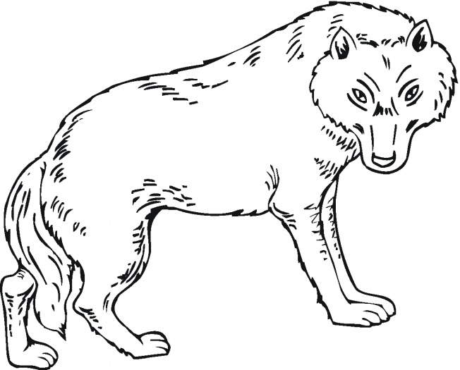 wolf coloring pages 15,printable,coloring pages