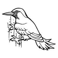 woodpecker coloring pages 12,printable,coloring pages