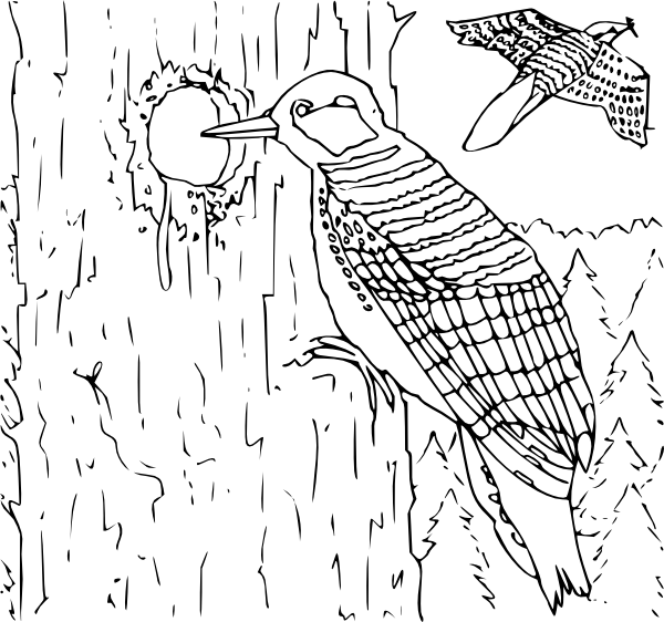 woodpecker coloring pages 15,printable,coloring pages