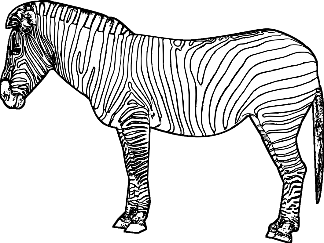 printable pictures of zebra page,printable,coloring pages