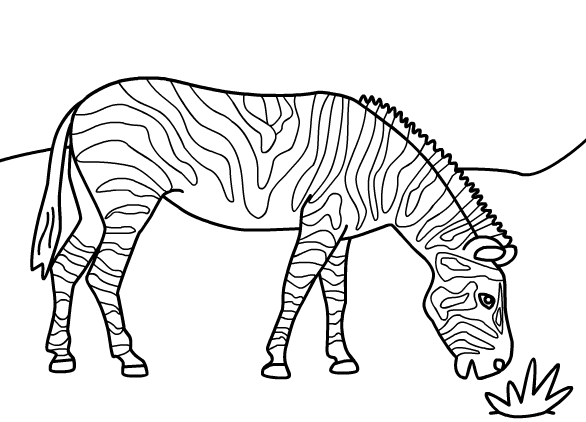 zebra coloring page to print,printable,coloring pages