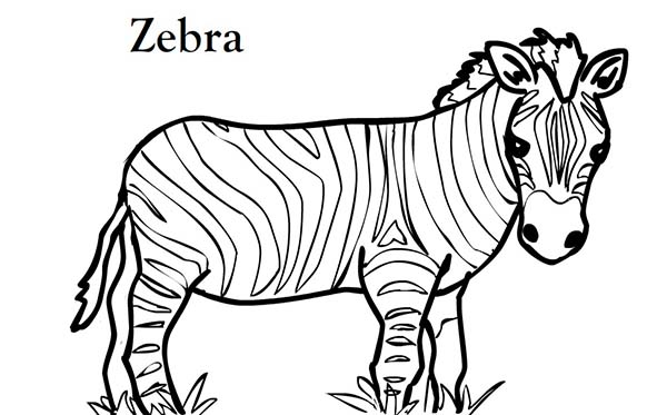 zoo animals coloring pages zebra - photo#12