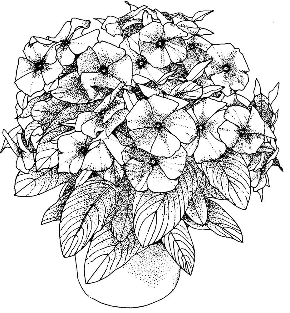 42 printable flower coloring pages - Print Color Craft