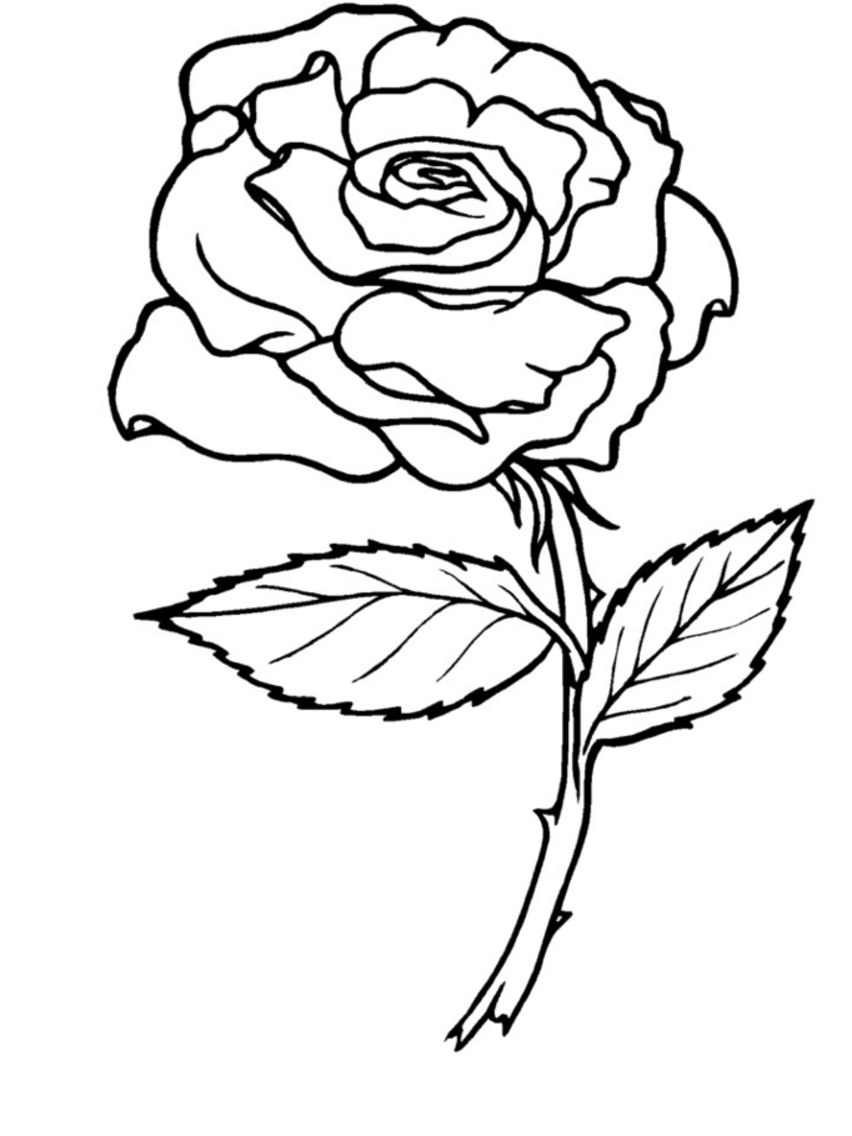 roses coloring pages for kids,printable,coloring pages