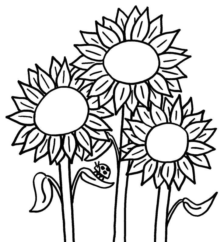 coloring pictures sunflower,printable,coloring pages