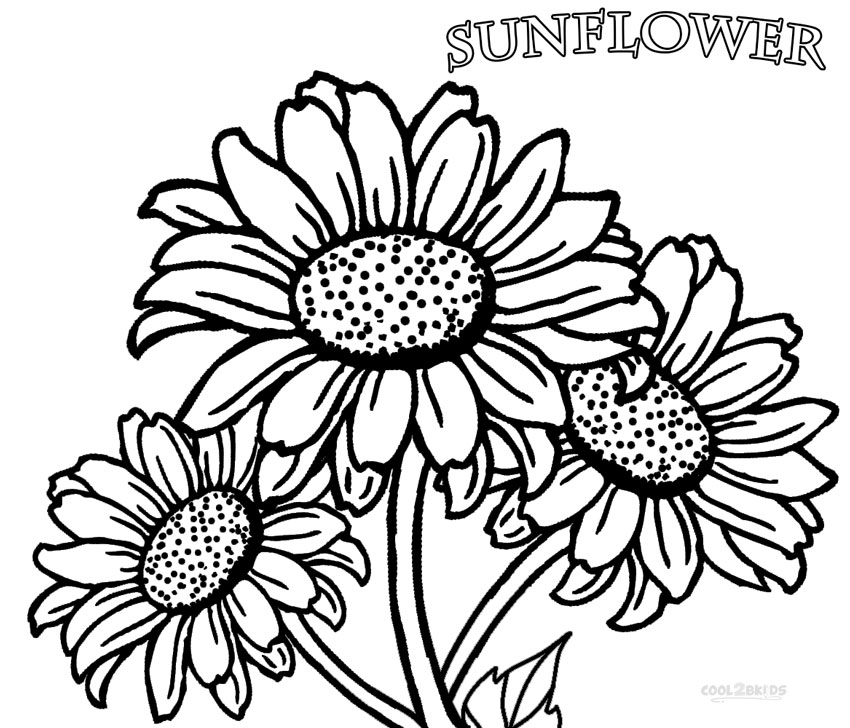 photograph about Printable Sunflower called 16 sunflower coloring internet pages - Print Colour Craft