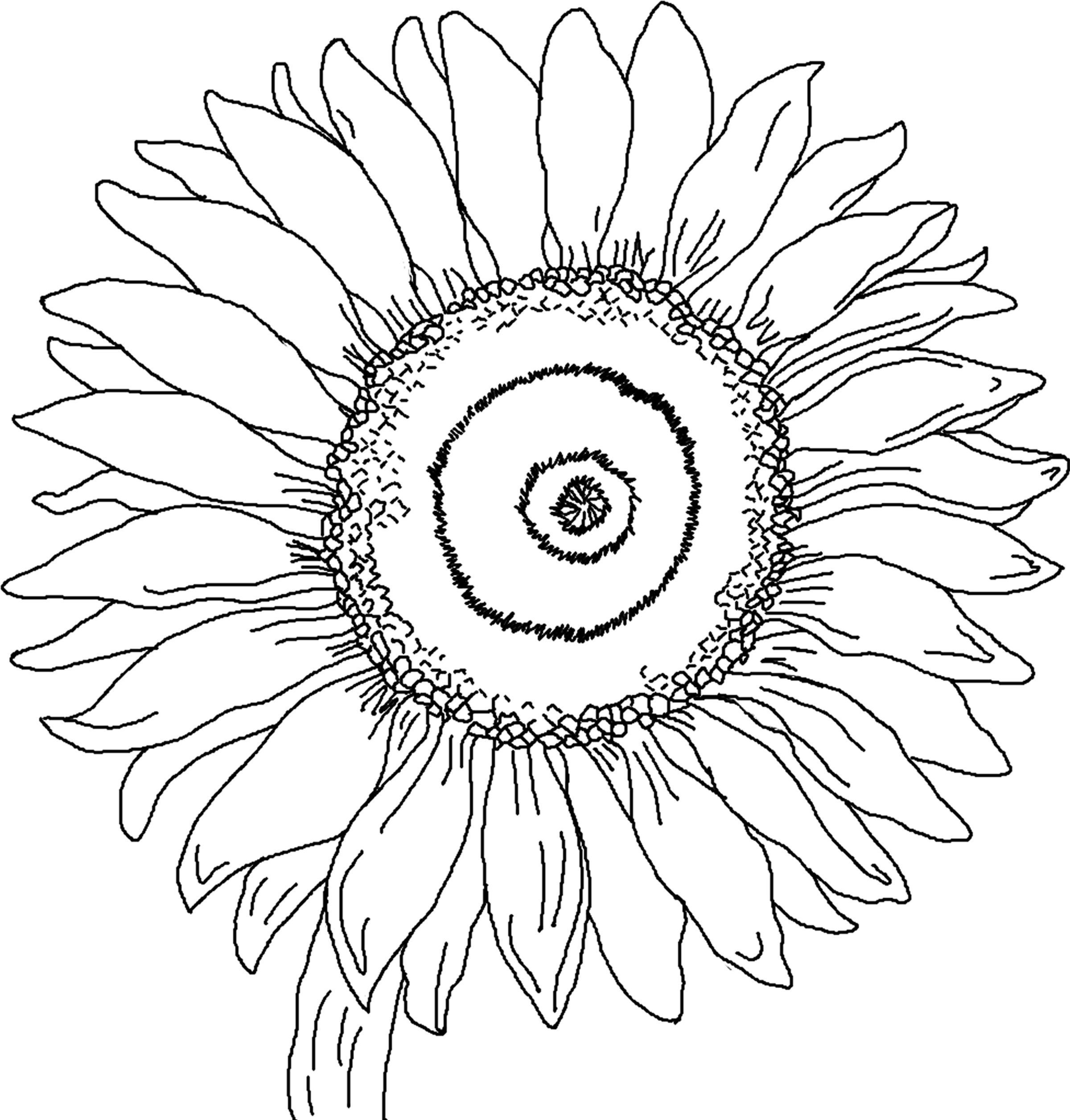 sunflower coloring pages 12,printable,coloring pages