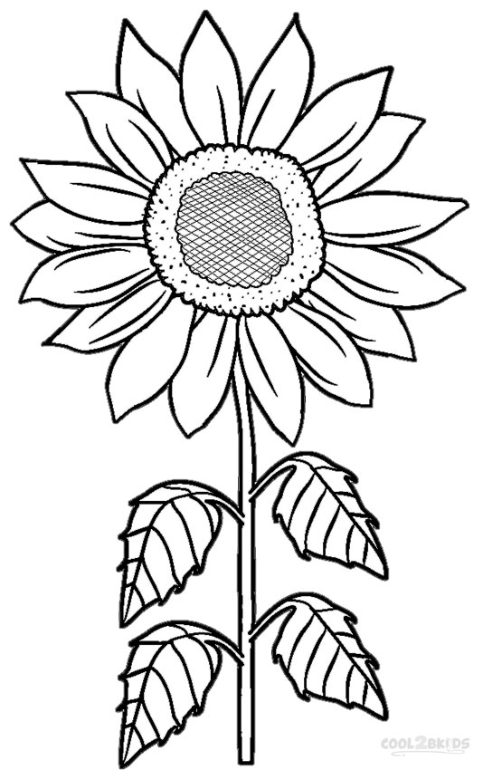 sunflower coloring pages 13,printable,coloring pages