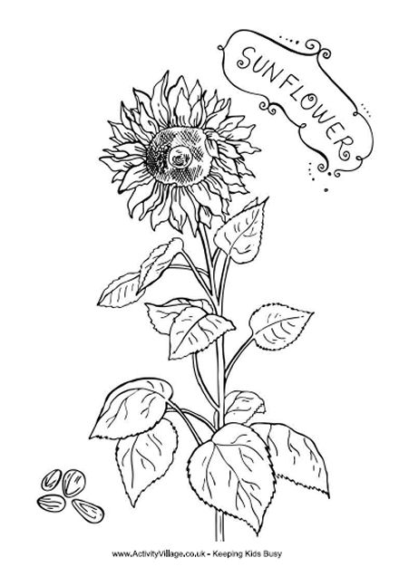 sunflower coloring pages 15,printable,coloring pages