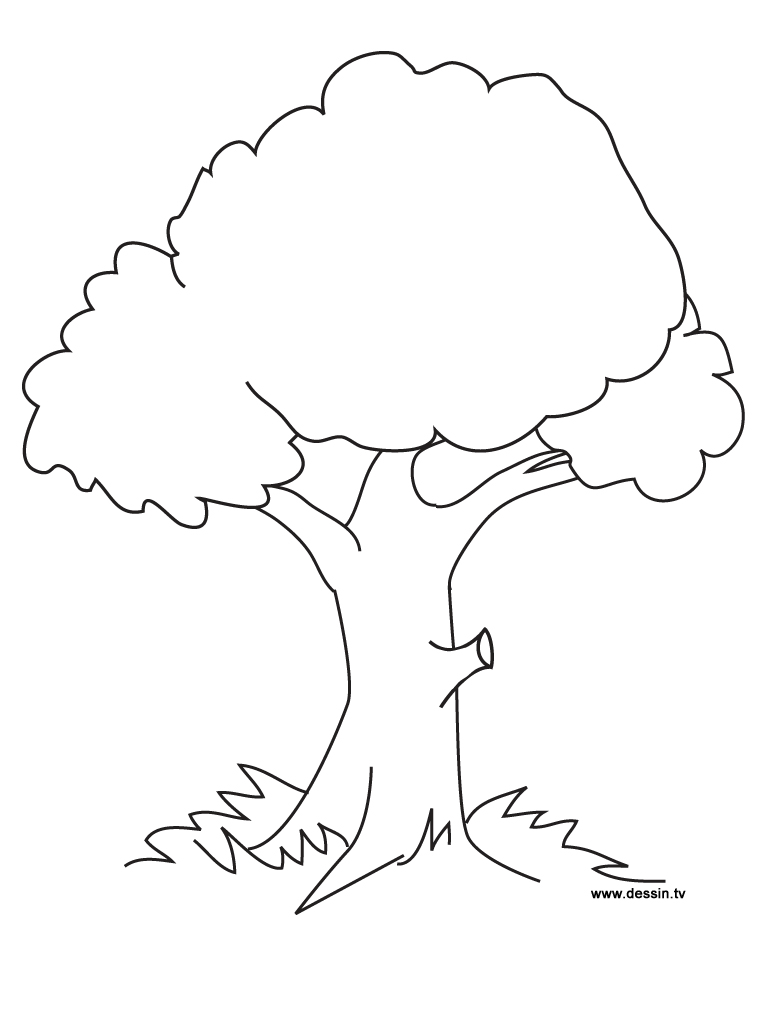 coloring pages of tree,printable,coloring pages