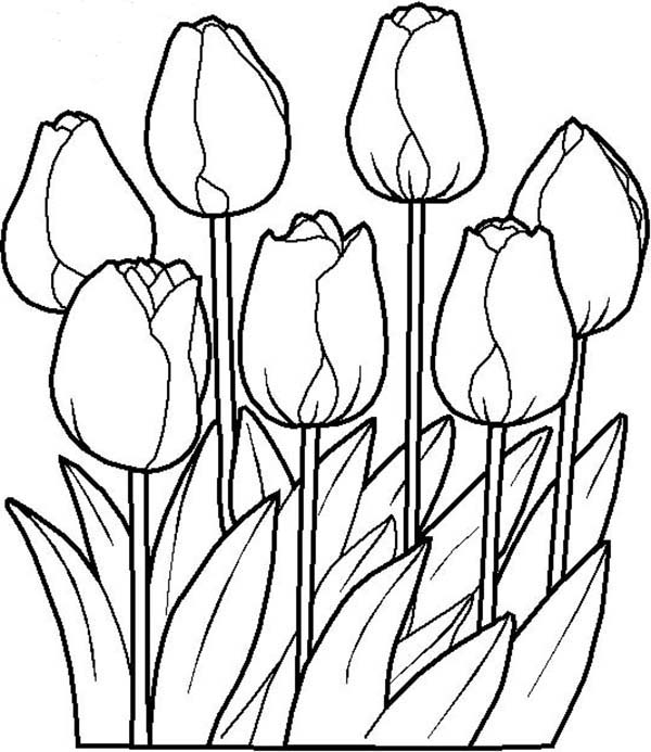 14 tulip coloring page - Print Color Craft