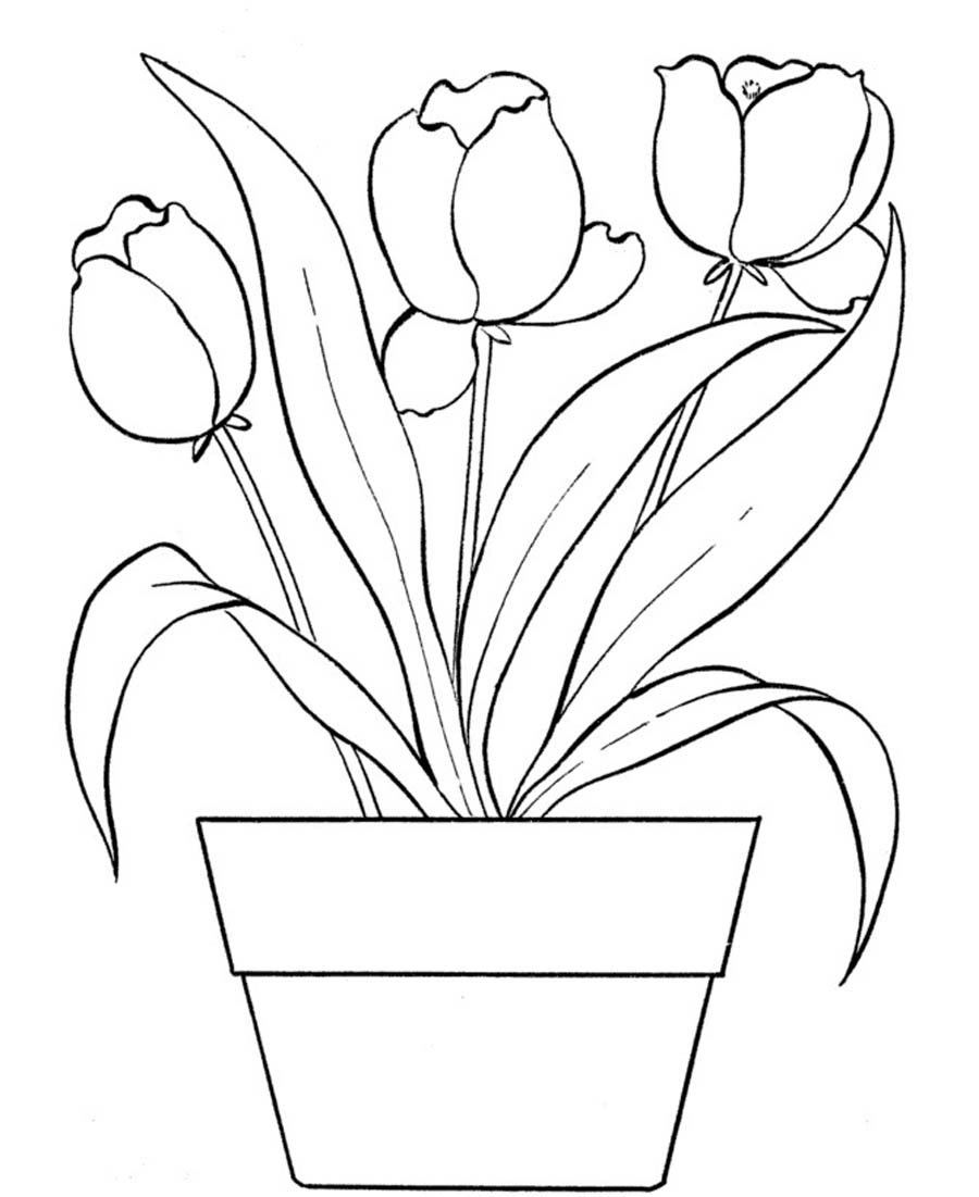 coloring page plants - 14 tulip coloring page print color craft