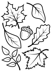 Fall Leaves and Nuts Autumn Coloring Pages for Preschool Toddlers
