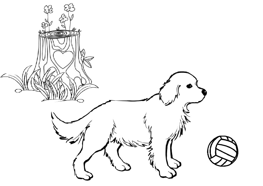 Realistic Golden Retriever Coloring Pages Photo | Dog coloring ... | 595x842