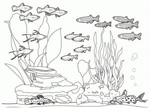 Ocean Bed Coral Reef and Undertwater Animals Ocean Coloring Pages