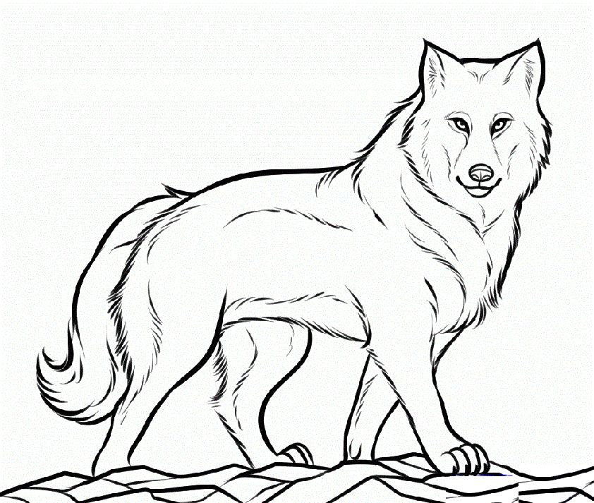 Wolf Coloring Pages Wild Animal Coloring Sheet