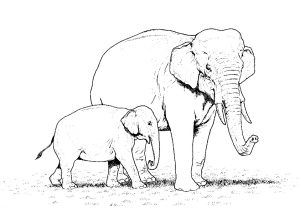 Elephant Mommy and Baby Realistic Coloring Pages