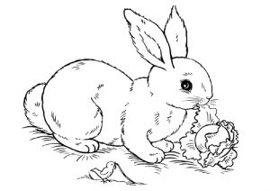 Herbivores Rabbit Eating Her Veggies Rabbit Coloring Pages