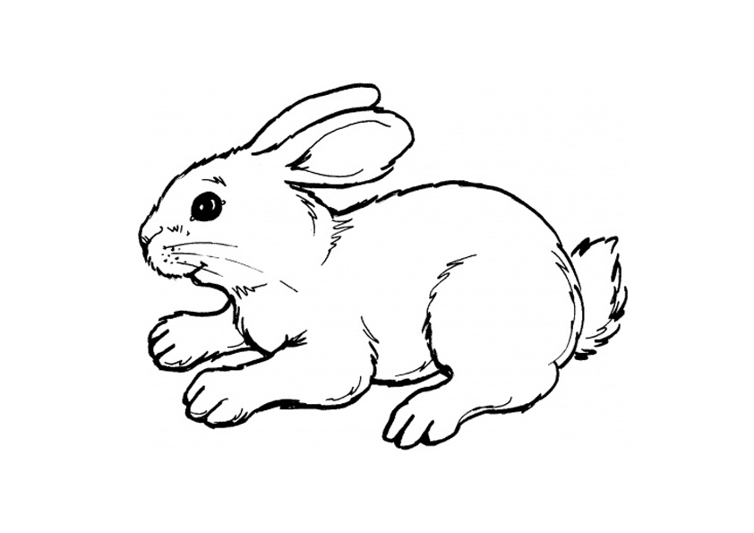 Realistic Looking Rabbit Coloring Pages