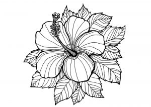 Beautiful Hibiscus Summer Flower Coloring Pages for Adults
