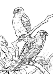 Birds of Prey Printable Coloring Pages