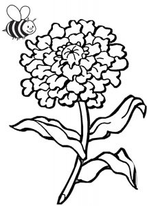 Chrysanthemum Flower Coloring pages