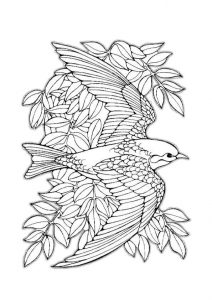 Detailed Realistic Bird Coloring Pages for Adults